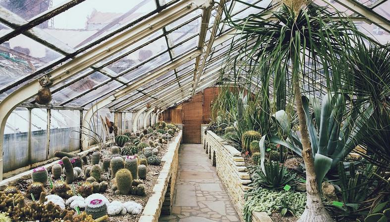 Comment choisir la bonne serre de jardin en fonction de vos besoins ?