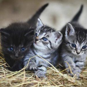 Premiers soins chaton